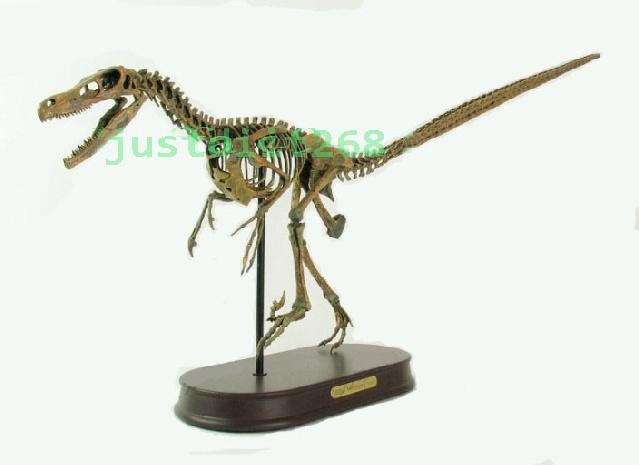 Velociraptor Dinosaur Fossil Skeleton Museum Model New